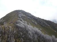 ジロウギュウの霧氷